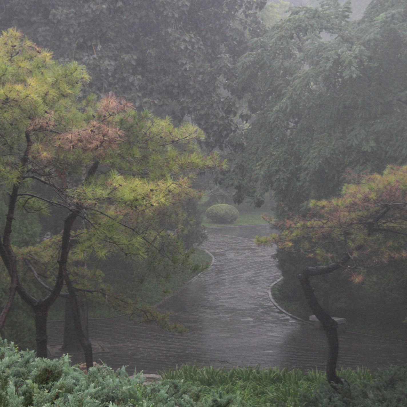Ritan_Park_1.jpg - Ritan is a park in Beijing: It was raining...